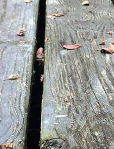 dont underestimate mould on your decking 1