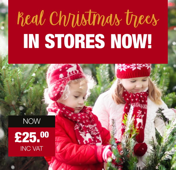 Real Christmas Trees In Store Now